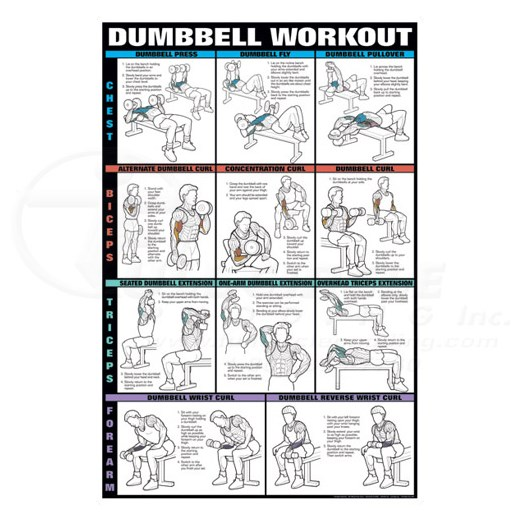 Dumbbell Workout Fitness Chart Chest Biceps Triceps